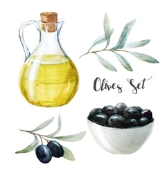 Watercolor olives and olive oil vector image