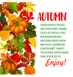 autumn season poster with pumpkin and fall leaf vector image