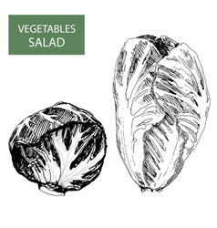 Salad - set of vector