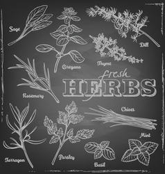 Herbs blackboard vector