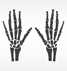 Human hands bones vector