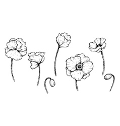 Set of black and white poppies vector