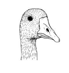 Ink drawing head of goose vector
