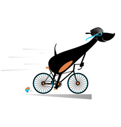 Cartoon dog rides a bike isolated vector