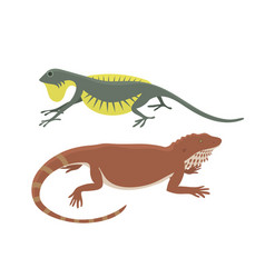 different kind of lizard reptile isolated vector image vector image