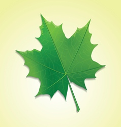maple leaf on colorful background vector image vector image