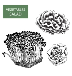 Salad - set of vector image vector image