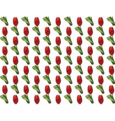 Tulip Flowers pattern vector image