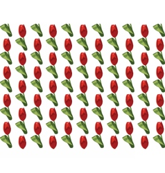 Tulip Flowers pattern vector image