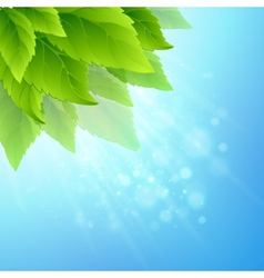 Spring fresh green leaves vector image