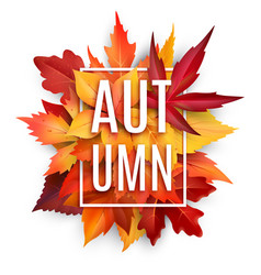 autumn leaf poster with fall season foliage vector image