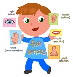 five senses boy vector image