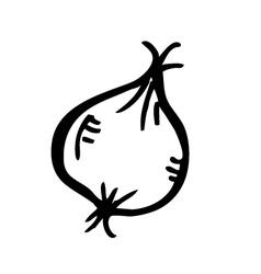 garlic doodle vector image vector image