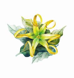 Watercolor ylang ylang vector