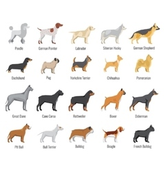 Dogs breed flat icons set vector