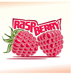 Raspberry still life vector