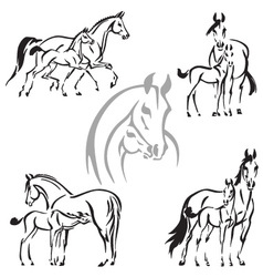 Mares and foals vector
