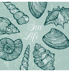 Background with sea shells vector