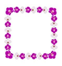 Beautiful orchid flowers frame vector