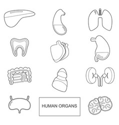human organs in outline style icons set vector image vector image