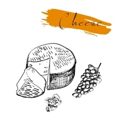 Cheese types delicious fresh cheese variet cheese vector