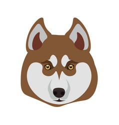 Siberian husky breed close up dog isolated on vector