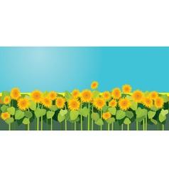 Sunflowers 380 vector