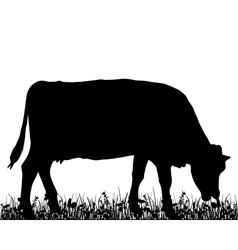 Cow in the meadow vector