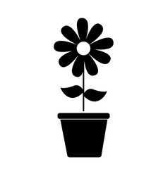 cute sunflower garden with pot isolated icon vector image