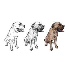 Drawing of mastiff dog on sitting pose vector image vector image
