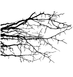 Dry tree dead tree with beautiful branch silhouet vector