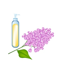 Essential oil and beautiful purple lavender flower vector