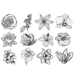 Floral sketch set vector