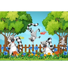 Four lemurs playing in garden vector image vector image