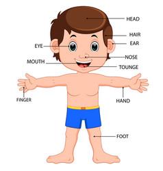 boy body parts diagram poster vector image