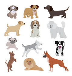 dog cute cartoon puppy home vector image
