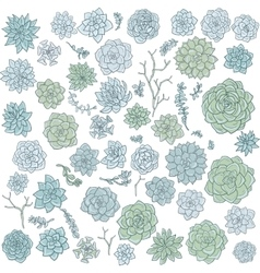 Hand drawn succulentes vector