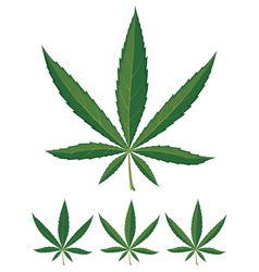 cannabis leaves over white background vector image vector image