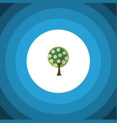 isolated garden flat icon tree element can vector image vector image