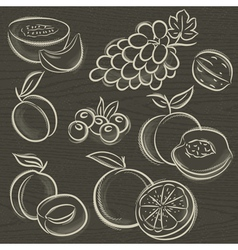 set of fruits grapes melon apricot peach vector image