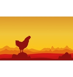 At sunset rooster landscape of silhouettes vector