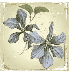 hand drawn clematis flowers in retro style vector image vector image