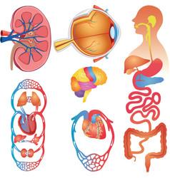 Human Body Parts Set vector image