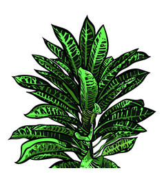 Tropical leaves jungle collection hand painted vector