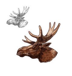 Moose elk muzzle profile isolated sketch vector