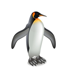 Penguin isolated on white vector image