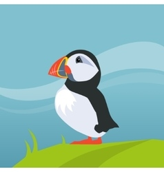 Puffin Bird In Iceland vector image