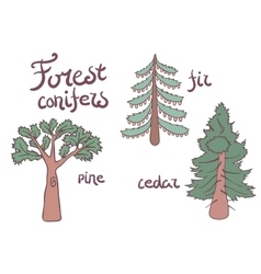 Forest conifer trees set isolated plan vector