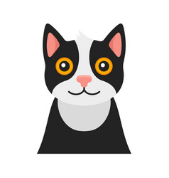 cat portrait on white background vector image vector image