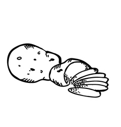 potato slice vector image vector image